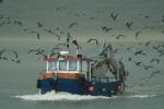 Vissersboot met zilvermeeuwen en kleine mantelmeeuwen