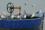 Meeuwen op visserssloep