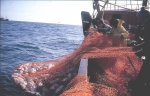 Plankenvisserij