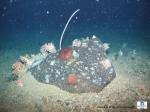 Boulder colonized by different species (corals, sea urchin, sea stars, sponges,…)