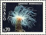 Cerianthus membranaceus