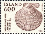 Chlamys islandica
