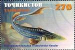 Pseudoscaphirhynchus fedtschenkoi