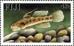 Redigobius sp.