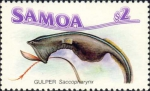 Saccopharynx sp.