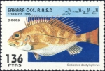 Sebastes dactylopterus