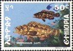 Serranus luti
