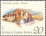 Serranus scriba