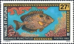 Siganus punctatus