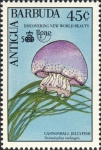 Stomolophus meleagris