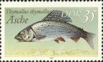 Salmoniformes