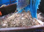 VLIZ website: Visserij en aquacultuur: Visserij