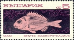 Dentex macrophthalmus
