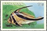 Equetus lanceolatus
