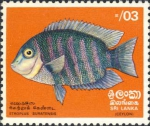 Etroplus suratensis
