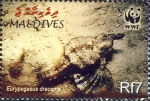 Eurypegasus draconis