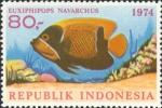 Euxiphipops navarchus