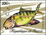 Gnathanodon speciosus