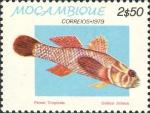Gobius inhaca