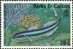 Elacatinus oceanops