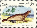 Monachus tropicalis