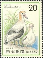 Diomedea albatrus