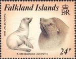 Arctocephalus australis