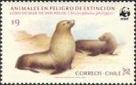 Arctocephalus philippii