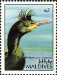 Phalacrocorax aristotelis