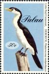 Phalacrocorax melanoleucos