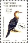 Phalacrocorax pygmeus