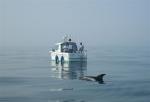 Zeezoogdieren