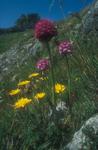 Kust fauna en flora