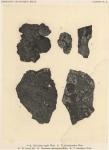 &lt;B&gt;Wainio, Ed.A.&lt;/B&gt; (1903). Botanique: Lichens. <i>Résultats du Voyage du S.Y. <i>Belgica</i> en 1897-1898-1899 sous le commandement de A. de Gerlache de Gomery: Rapports Scientifiques (1901-1913)</i>. Buschmann: Anvers, Belgium. 46, III plates pp.