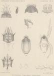 &lt;B&gt;Trouessart, E.&lt;/B&gt; (1903). Zoologie: Acariens (Trombidae, Eupodidae, Gamasidae). <i>Résultats du Voyage du S.Y. <i>Belgica</i> en 1897-1898-1899 sous le commandement de A. de Gerlache de Gomery: Rapports Scientifiques (1901-1913)</i>. Buschmann: Anvers