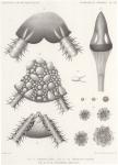 Zeesterren, zee-egels en zeekomkommers