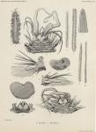 Fauvel, P. (1936). Polychètes. Résultats du Voyage de la Belgica en 1897-1899 sous le commandement de A. de Gerlache de Gomery: Rapports Scientifiques (1926-1940). Buschmann: Anvers, Belgium. 44, 4 fig., 1 pl. pp.