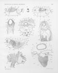 &lt;B&gt;Pelseneer, P.&lt;/B&gt; (1911). Les Lamellibranches de l'expédition du <i>Siboga</i>: partie anatomique. <i><i>Siboga</i>-Expeditie: uitkomsten op zoölogisch, botanisch, oceanographisch en geologisch gebied verzameld in Nederlandsch Oost-Indië 1899-1900 aan