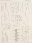 &lt;B&gt;Topsent, É.&lt;/B&gt; (1902). Zoologie: Spongiaires. <i>Résultats du Voyage du S.Y. <i>Belgica</i> en 1897-1898-1899 sous le commandement de A. de Gerlache de Gomery: Rapports Scientifiques (1901-1913)</i>. Buschmann: Anvers, Belgium. 54, VI plates pp.