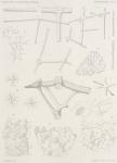 Topsent, É. (1902). Zoologie: Spongiaires. Résultats du Voyage du S.Y. Belgica en 1897-1898-1899 sous le commandement de A. de Gerlache de Gomery: Rapports Scientifiques (1901-1913). Buschmann: Anvers, Belgium. 54, VI plates pp.