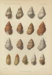 &lt;B&gt;Dautzenberg, Ph.&lt;/B&gt; (1889). Contribution à la faune malacologique des Iles Açores. <i>Résultats des Campagnes Scientifiques Accomplies sur son Yacht par Albert Ier Prince Souverain de Monaco</i>, I. Imprimerie de Monaco: Monaco. 112, IV plates pp.