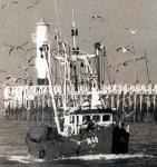 N.49 Steve (bouwjaar 1982)