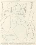 Ruffo, S. (1949). Zoologie: Amphipodes (II). Résultats du Voyage de la Belgica en 1897-1899 sous le commandement de A. de Gerlache de Gomery: Rapports Scientifiques (1941-1949). Buschmann: Anvers, Belgium. 58 pp.