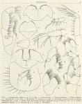 &lt;B&gt;Ruffo, S.&lt;/B&gt; (1949). Zoologie: Amphipodes (II). <i>Résultats du Voyage de la <i>Belgica</i> en 1897-1899 sous le commandement de A. de Gerlache de Gomery: Rapports Scientifiques (1941-1949)</i>. Buschmann: Anvers, Belgium. 58 pp.