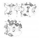 Kwallen, poliepen en anemonen