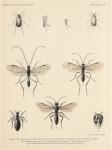 Bergroth, E. (1906). Zoologie: Insectes. Hémiptères. Résultats du Voyage du S.Y. Belgica en 1897-1898-1899 sous le commandement de A. de Gerlache de Gomery: Rapports Scientifiques (1901-1913). Buschmann: Anvers, Belgium. 13-15 pp.