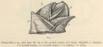 &lt;B&gt;Hoek, P.P.C.&lt;/B&gt; (1907). Zoologie: Cirripedia. <i>Résultats du Voyage du S.Y. <i>Belgica</i> en 1897-1898-1899 sous le commandement de A. de Gerlache de Gomery: Rapports Scientifiques (1901-1913)</i>. Buschmann: Anvers, Belgium. 9 pp.