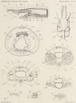 &lt;B&gt;Pelseneer, P.&lt;/B&gt; (1903). Zoologie: Mollusques (Amphineures, Gastropodes et Lamellibranches). <i>Résultats du Voyage du S.Y. <i>Belgica</i> en 1897-1898-1899 sous le commandement de A. de Gerlache de Gomery: Rapports Scientifiques (1901-1913)</i>. Busc
