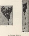 &lt;B&gt;Dilwyn John, D.&lt;/B&gt; (1937). Zoology: Crinoidea. <i>Résultats du Voyage de la <i>Belgica</i> en 1897-1899 sous le commandement de A. de Gerlache de Gomery: Rapports Scientifiques (1926-1940)</i>. Buschmann: Anvers, Belgium. 10 pp.