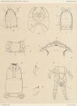 Attems, C. (1902). Zoologie: Myriapodes. Résultats du Voyage du S.Y. Belgica en 1897-1898-1899 sous le commandement de A. de Gerlache de Gomery: Rapports Scientifiques (1901-1913). Buschmann: Anvers, Belgium. 5, I plate pp.